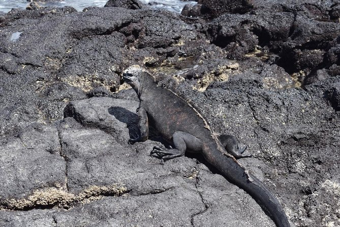 Explore Tintoreras Islet from Isabela in Galapagos Islands - Half Day Tour