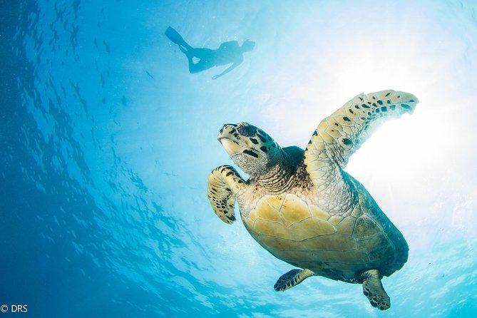 Turtle Dive (Discover Scuba Dive)
