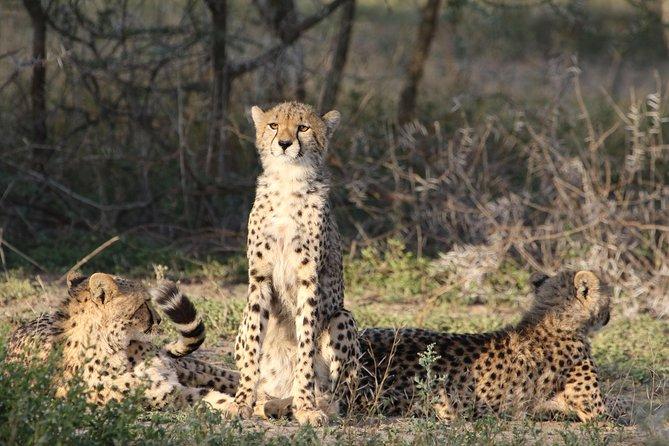 7 Days Honeymoon Safari