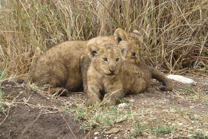 8 Days Nature Drive Safari