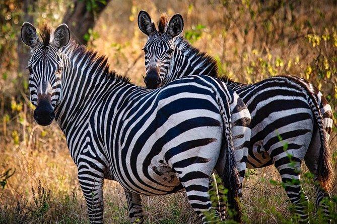 8 Days Uganda Safaris Gorilla & Chimpanzee