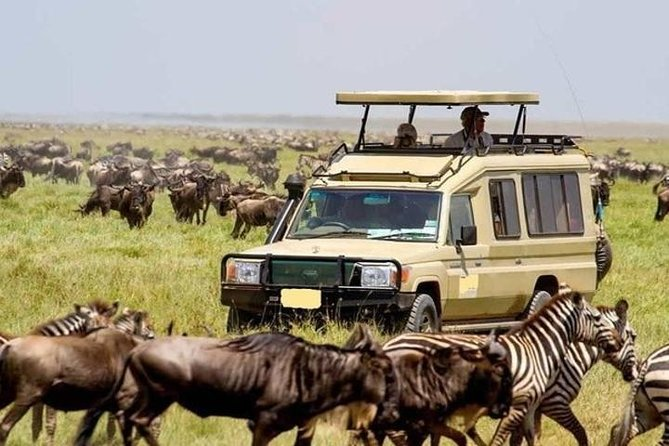 3 days 2 nights masai mara Luxury safari offer