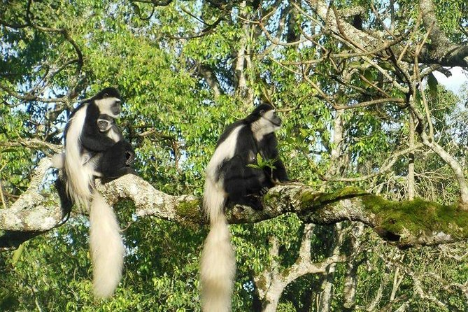 Day Tour to Arusha National Park