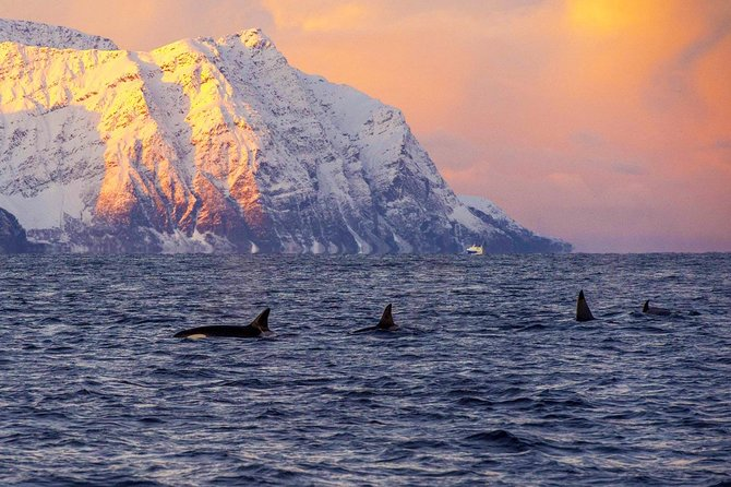 Whale Research Safari and Lyngen Alps Bus Tour
