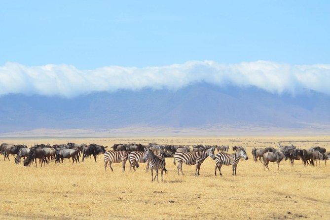 4 days Ngorongoro -Serengeti-Manyara