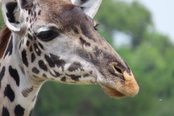 7 Days, Luxury Safari