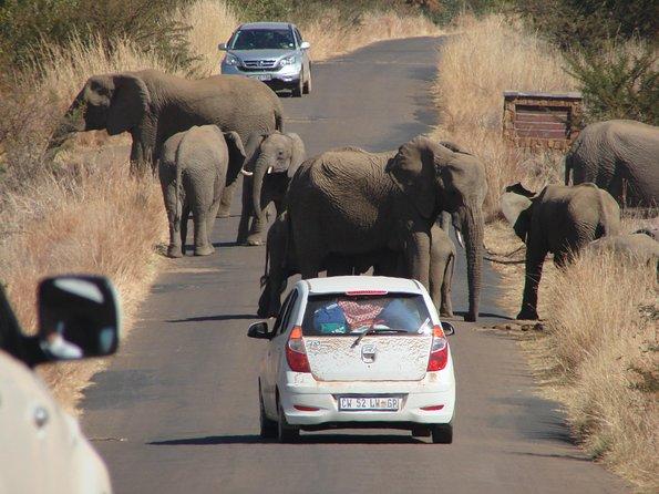 Pilanesberg National Park Open Truck