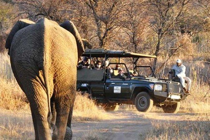 2 Days/ 1 Night - Dinokeng Safaris and Cullinan tours