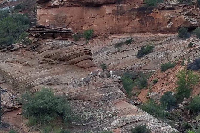 Private Day Tour: Zion National Park photo 3