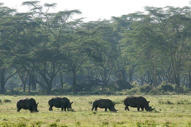 2 Days 1 Night Lake Nakuru National Park Tour