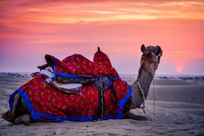 Camel Safari With Dinner In Jaipur - A Guided Experience photo 6