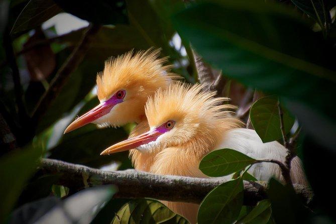 Chasing Wild Birds