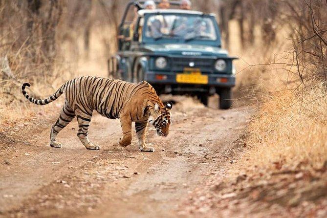 Delhi - Ranthambore Trip - A 2-Day Trip In Private Car