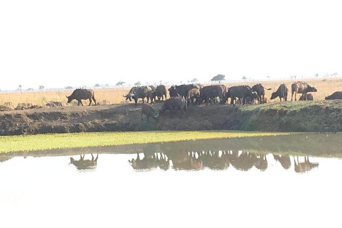 Full day safari in Mikumi national park