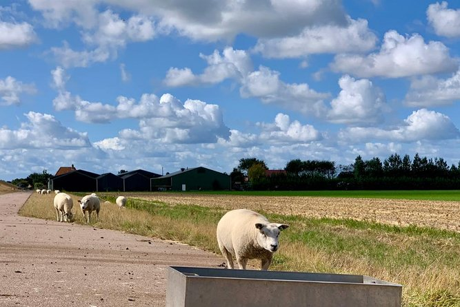 Texel Island in UNESCO's Wadden Sea - Full Day Private Tour from Amsterdam