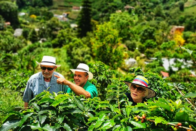Coffee Private Tour in the beautiful Jardin town (Full-Day)