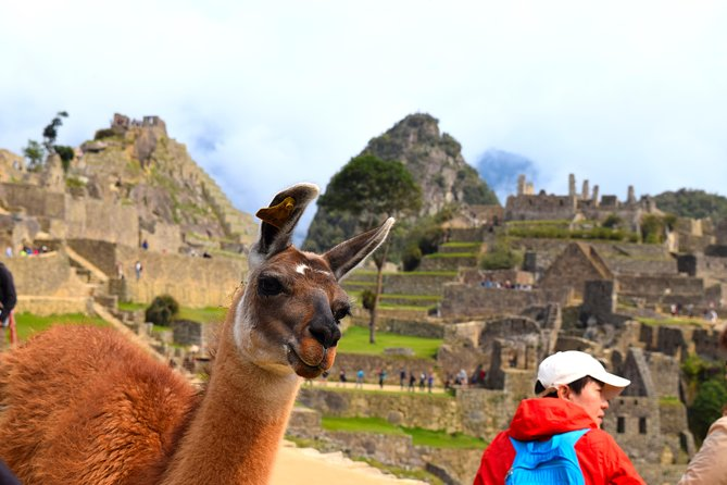 Private Tour, Full Day Machu Picchu with Lunch photo 3