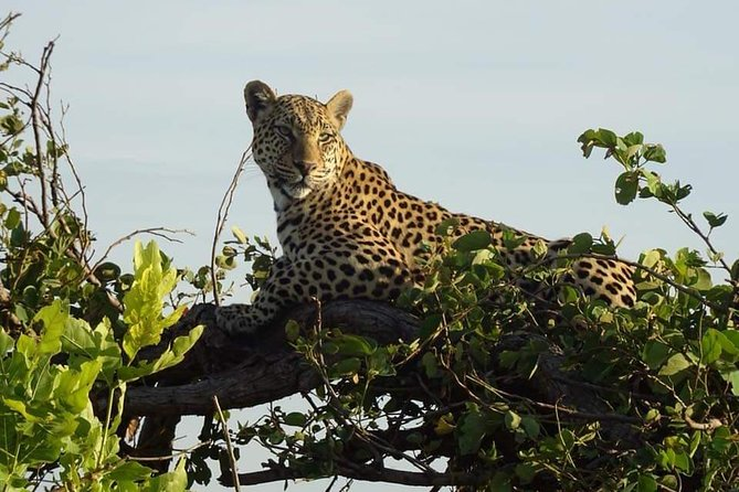 Chobe Safari Day Trip photo 7