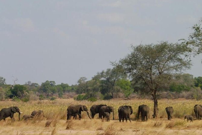 7 Days Kafue National Park photo 4