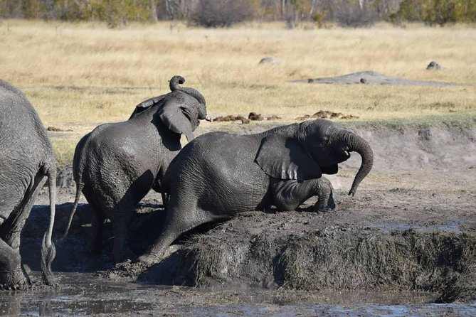 Chobe Safari Day Trip photo 10