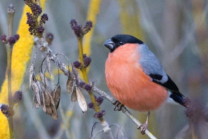 Ornithological Weekend