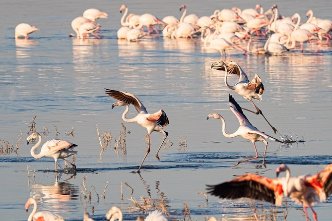 Make a date with Flamingos and Rhinos of Lake Nakuru National Park - 1 Day photo 8