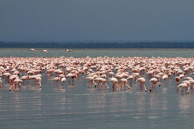 Make a date with Flamingos and Rhinos of Lake Nakuru National Park - 1 Day photo 1