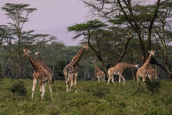 Make a date with Flamingos and Rhinos of Lake Nakuru National Park - 1 Day photo 2