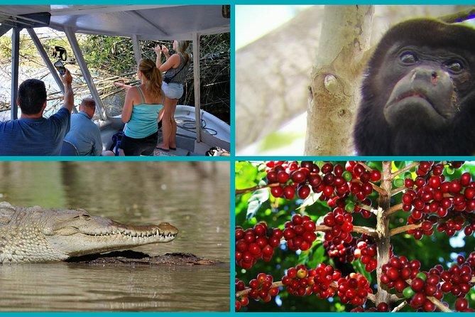 Palo Verde Boat Safari & Coffee Tour Combo
