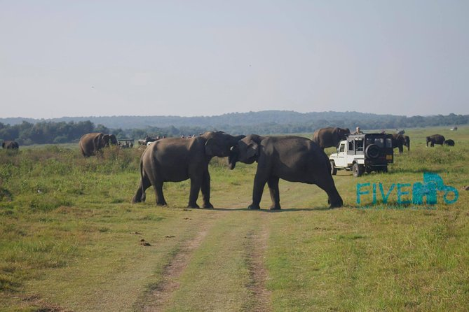 Private Jeep Safari at Minneriya National Park photo 8