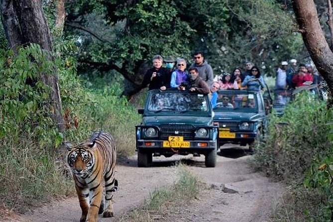 Ranthambore Tour By Car From Delhi