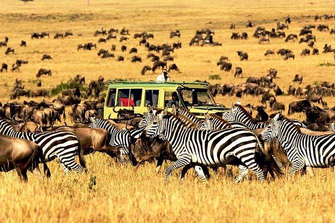 4 Days Mid-range Safari Serengeti,Ngorongoro and Lake Manyara National Park
