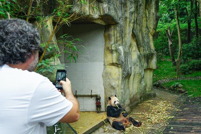 Easy Panda Visit: 2 hours Panda Valley trip