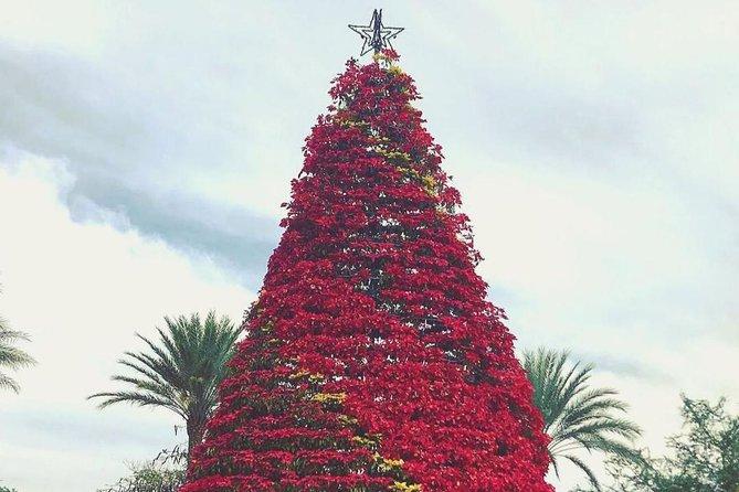 Magic Christmas Tour in Queretaro
