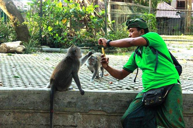 Perfect Day Trip to Ubud