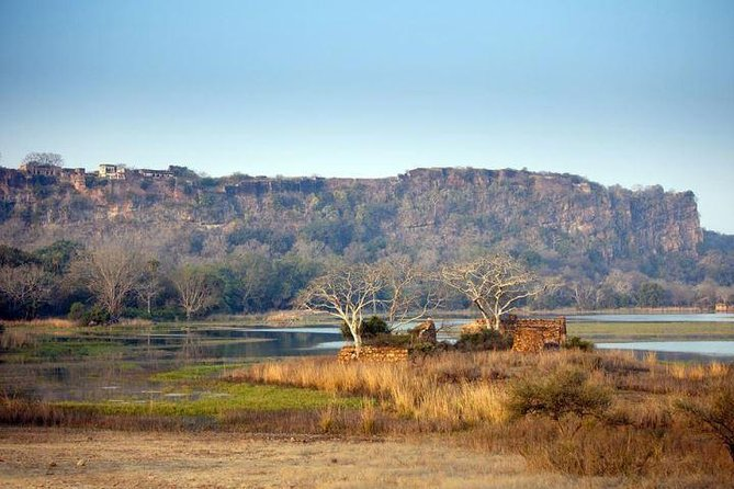Ranthambore Tiger Safari Private Day Tour From Jaipur