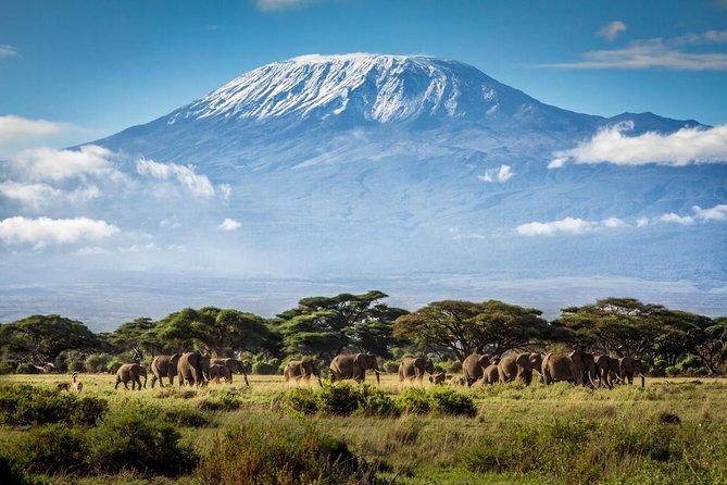 7 Days Mount Kilimanjaro Rongai Route