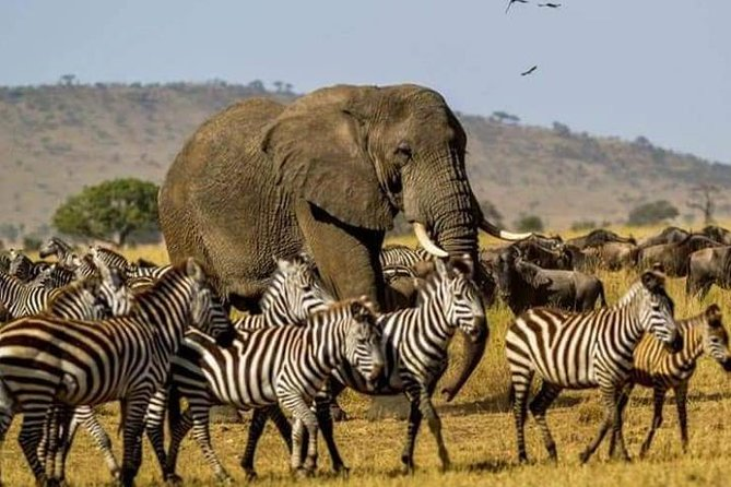 6 Day Safari Lake Manyara – Serengeti – Ngorogoro Crater – Tarangire