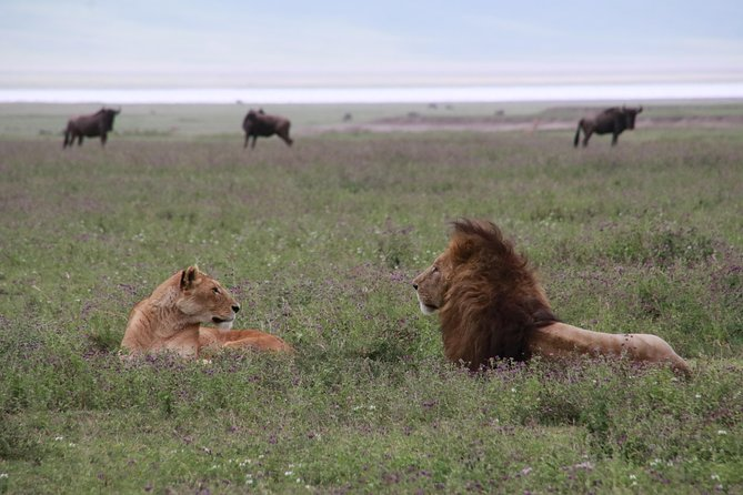 8 Days Serengeti and Ngorongoro bonanza