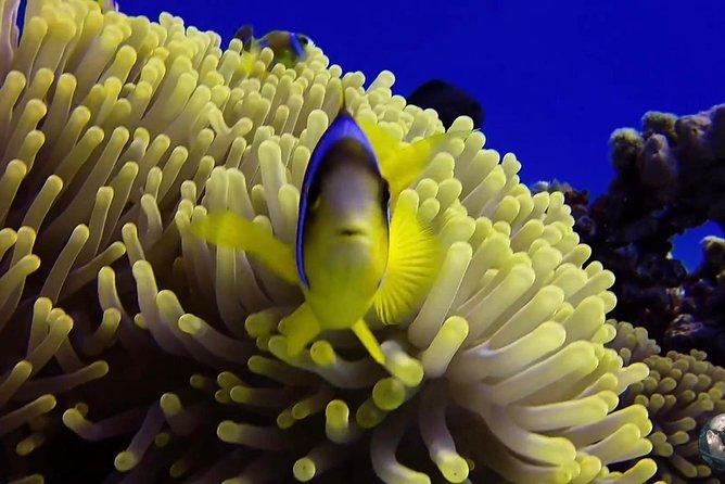 Tiran Island Full Day Snorkel Sea Excursion - Sharm El Sheikh