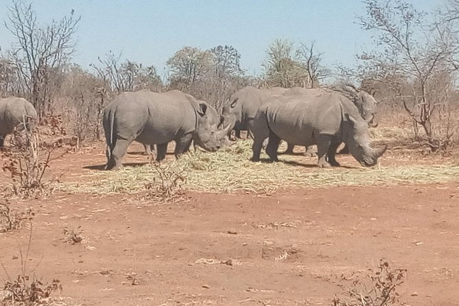 Short Rhino safari walk. photo 2