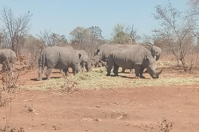 Short Rhino safari walk. photo 15