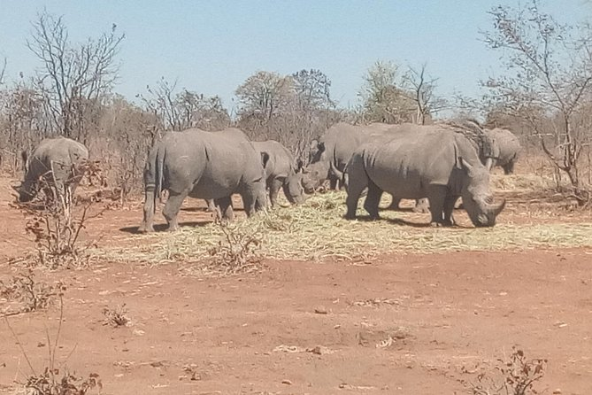 Short Rhino safari walk. photo 12
