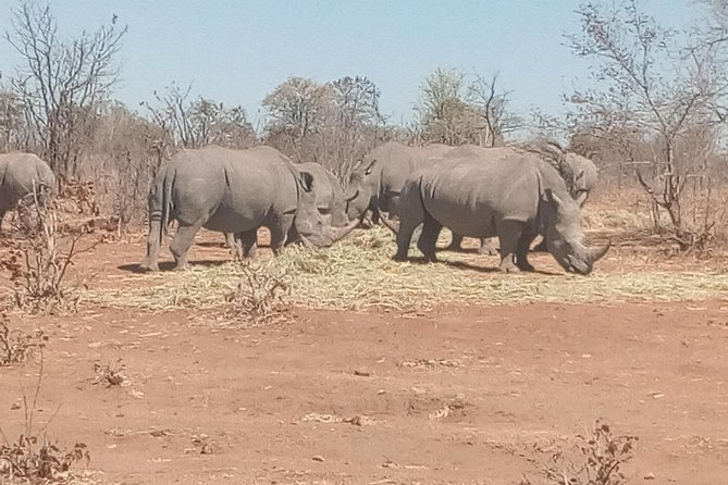 Short Rhino safari walk. photo 20