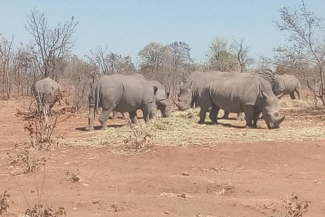 Short Rhino safari walk. photo 43