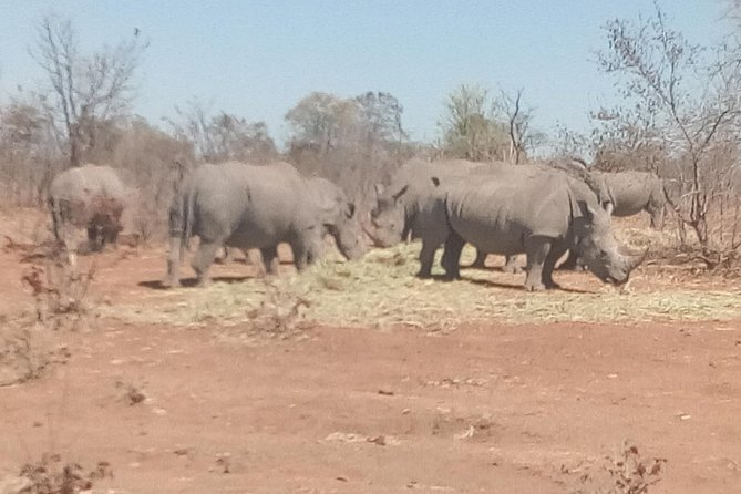 Short Rhino safari walk. photo 39