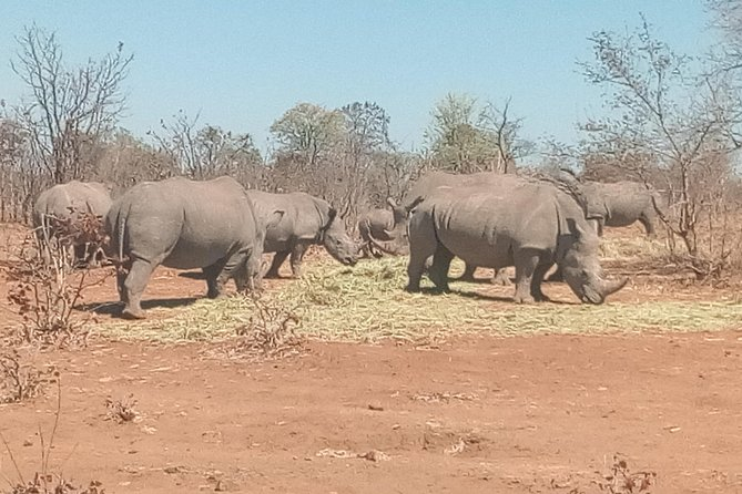 Short Rhino safari walk. photo 40