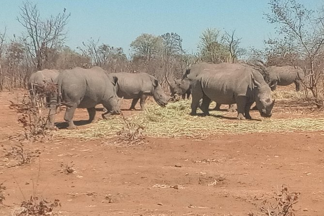 Short Rhino safari walk. photo 4