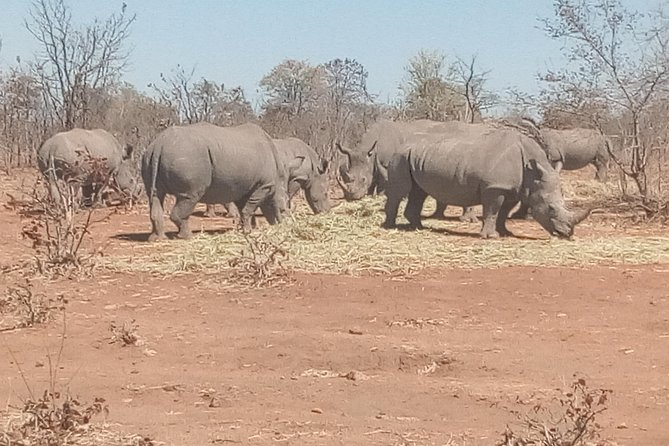 Short Rhino safari walk. photo 28