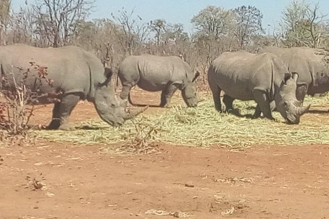 Short Rhino safari walk. photo 32
